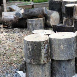 桐材の原木